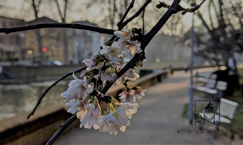 Baumblüte an Neujahr (Bild 1)